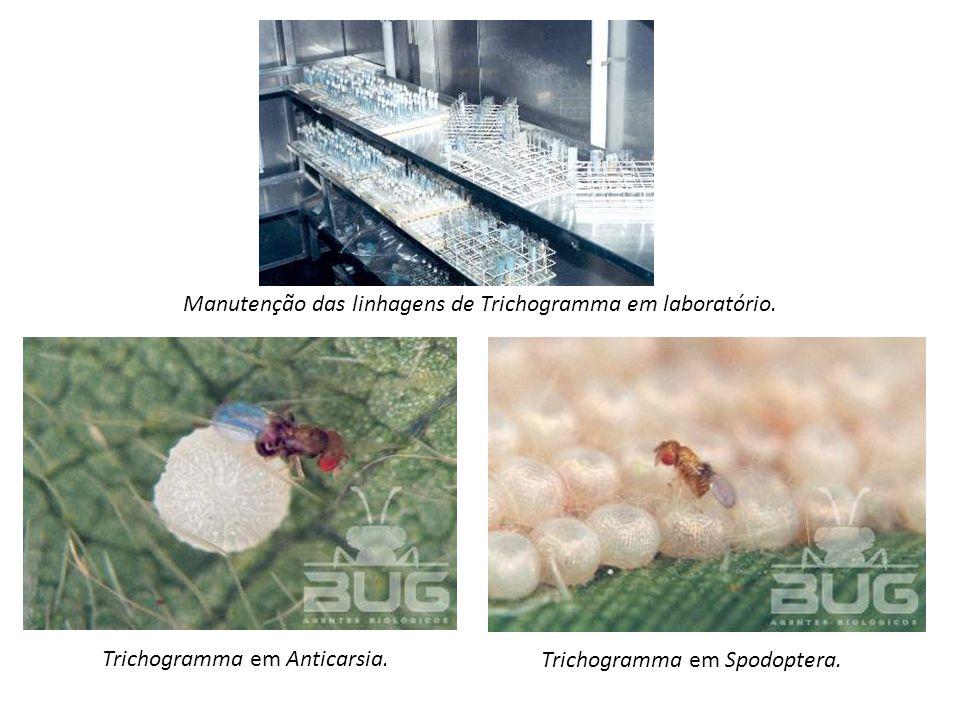 Trichogramma em Anticarsia. Trichogramma em Spodoptera. Manutenção das linhagens de Trichogramma em laboratório.