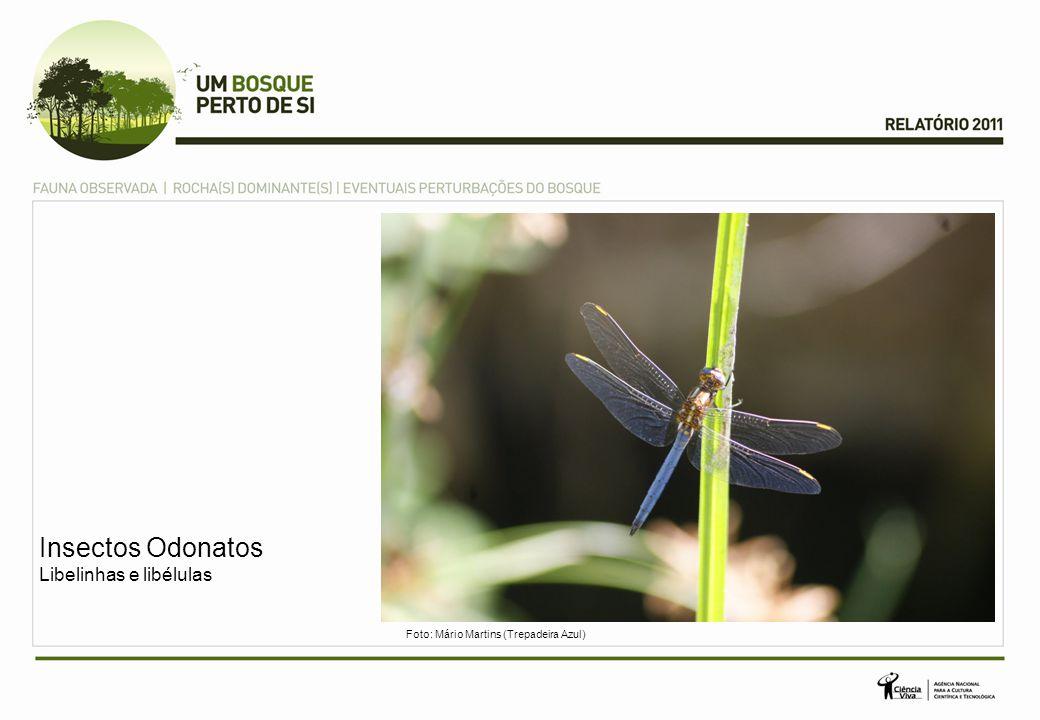 Insectos Odonatos Libelinhas e libélulas Foto: Mário Martins (Trepadeira Azul)