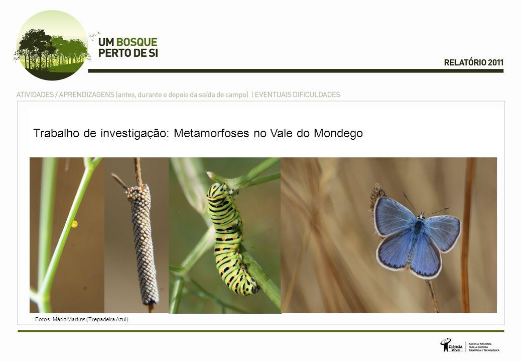 Trabalho de investigação: Metamorfoses no Vale do Mondego Fotos: Mário Martins (Trepadeira Azul)