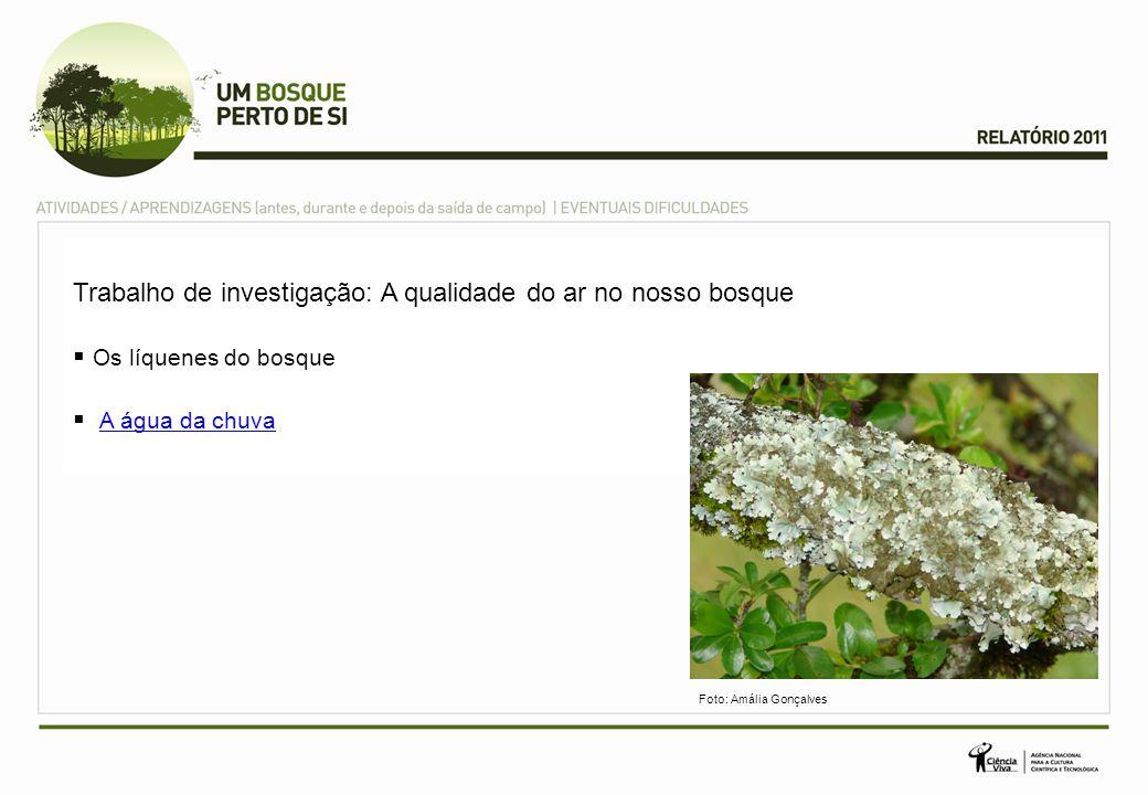 Trabalho de investigação: A qualidade do ar no nosso bosque Os líquenes do bosque A água da chuva Foto: Amália Gonçalves