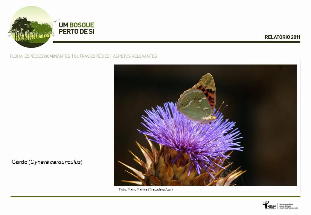 Aves Perdiz-vermelha (Alectoris rufa) Foto: Mário Martins (Trepadeira Azul)