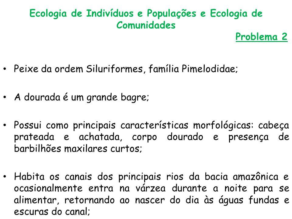 Ecologia de Indivíduos e Populações e Ecologia de Comunidades Problema 2 Peixe da ordem Siluriformes, família Pimelodidae; A dourada é um grande bagre