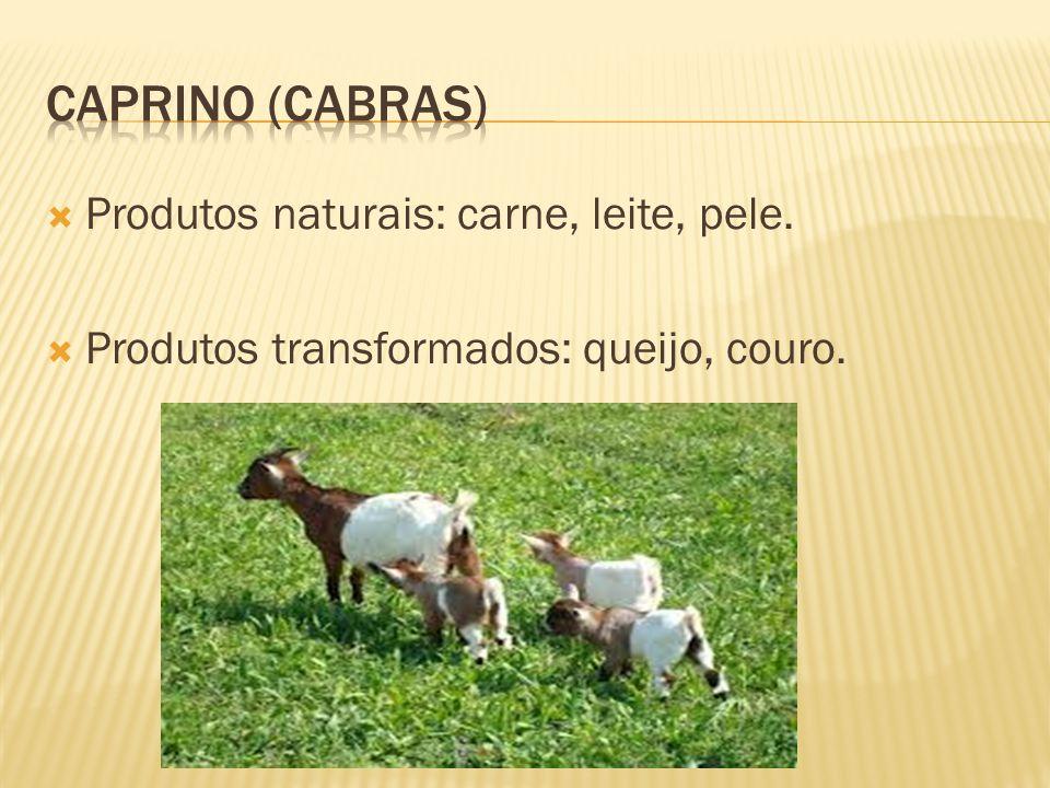 Produtos naturais: carne, leite, pele. Produtos transformados: queijo, couro.