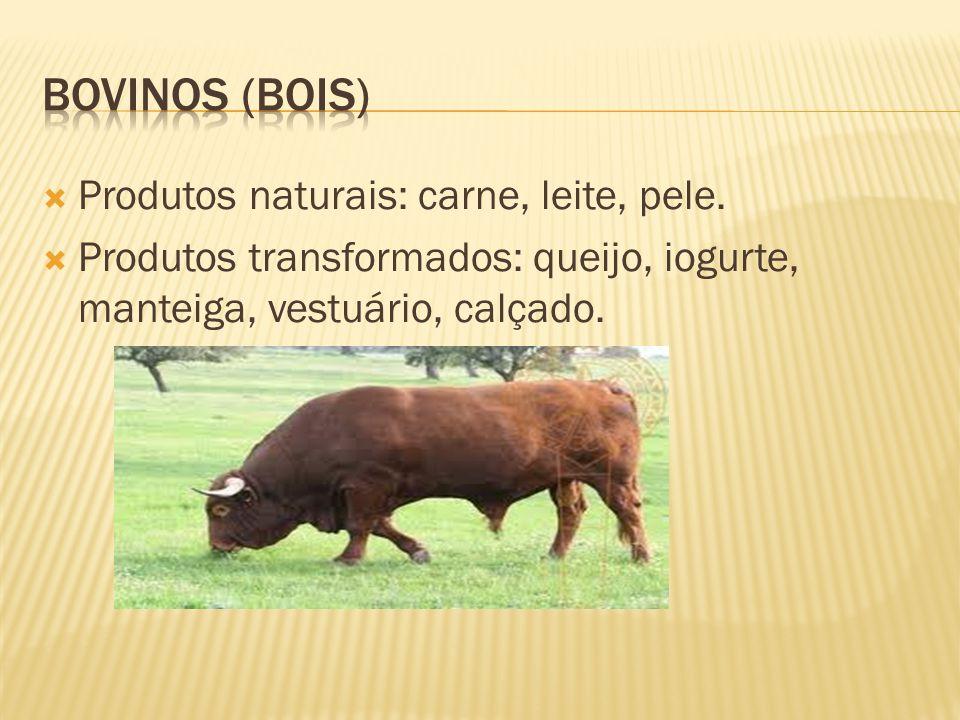 Produtos naturais: carne, leite, pele.