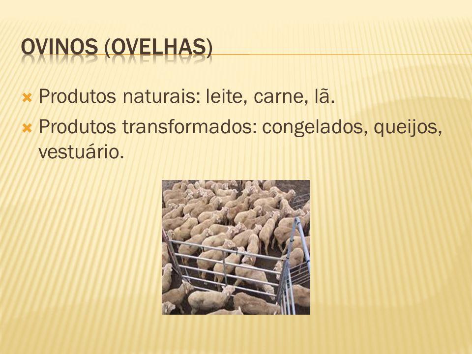 Produtos naturais: carne, leite, pele. Produtos transformados: queijo, iogurte, manteiga, vestuário, calçado.