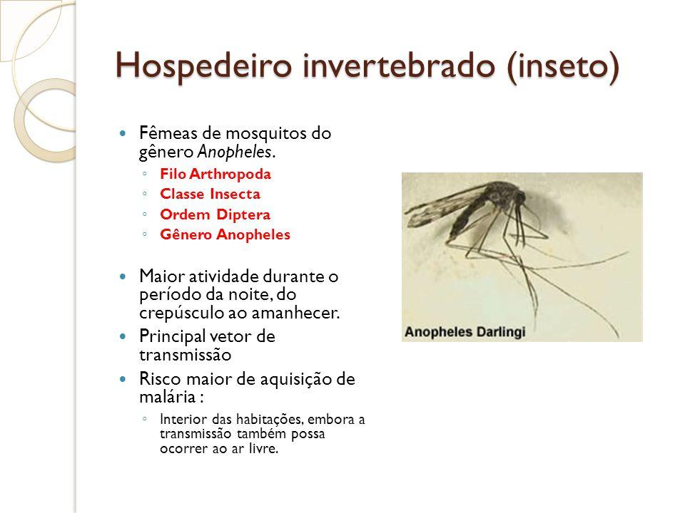 Hospedeiro invertebrado (inseto) Fêmeas de mosquitos do gênero Anopheles. Filo Arthropoda Classe Insecta Ordem Diptera Gênero Anopheles Maior atividad