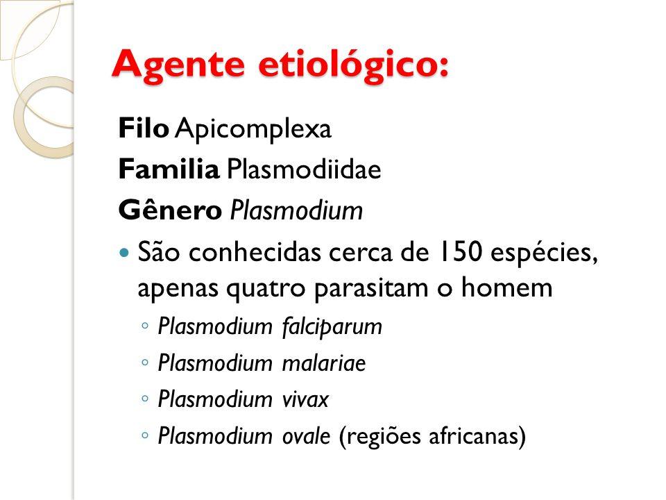 Agente etiológico: Filo Apicomplexa Familia Plasmodiidae Gênero Plasmodium São conhecidas cerca de 150 espécies, apenas quatro parasitam o homem Plasm