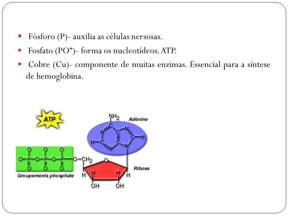 Fósforo (P)- auxilia as células nersosas. Fosfato (PO 4 )- forma os nucleotídeos. ATP. Cobre (Cu)- componente de muitas enzimas. Essencial para a sínt