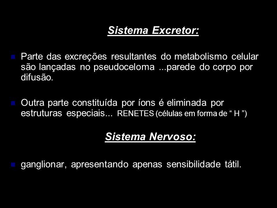 Sistema Excretor: Parte das excreções resultantes do metabolismo celular são lançadas no pseudoceloma...parede do corpo por difusão. Outra parte const