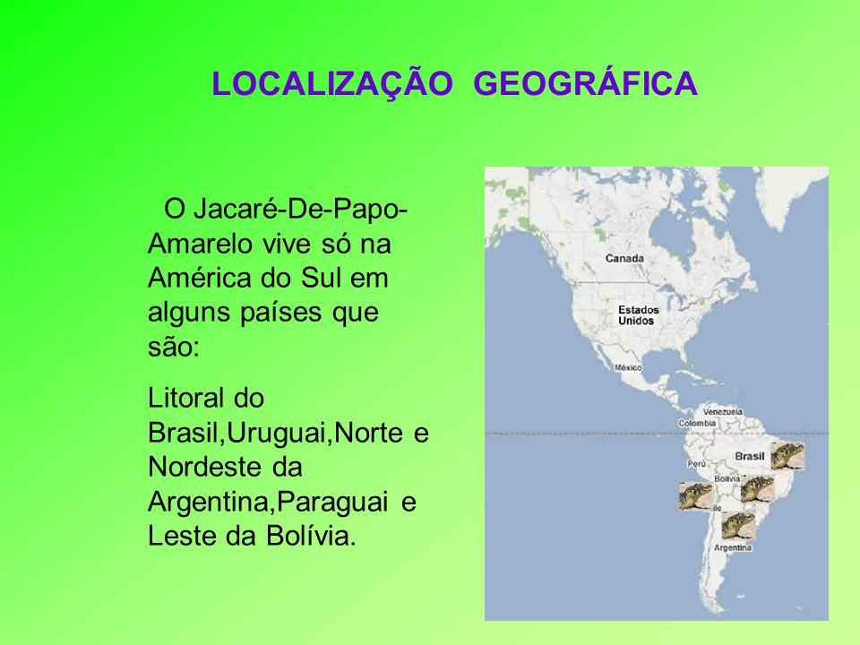 LOCALIZAÇÃO GEOGRÁFICA O Jacaré-De-Papo- Amarelo vive só na América do Sul em alguns países que são: Litoral do Brasil,Uruguai,Norte e Nordeste da Arg