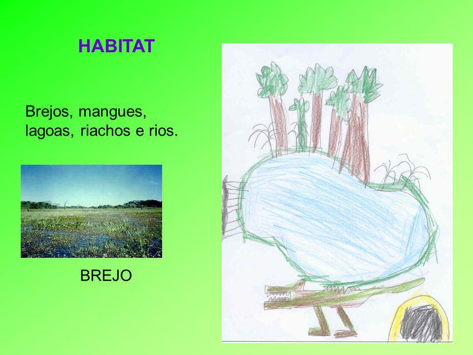 HABITAT Brejos, mangues, lagoas, riachos e rios. BREJO