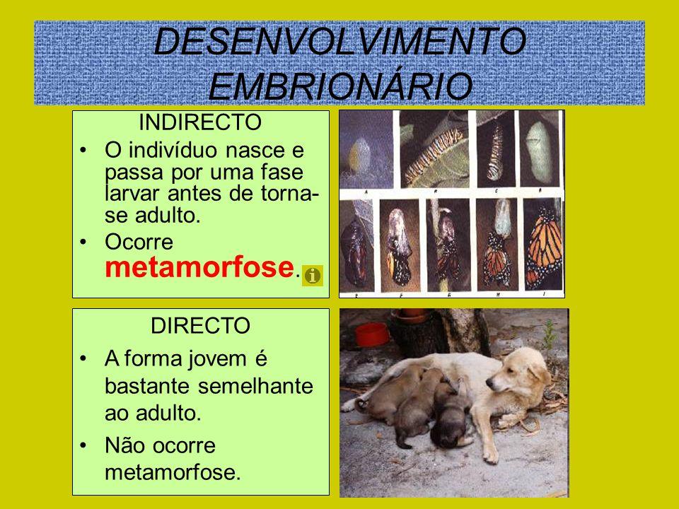 DESENVOLVIMENTO EMBRIONÁRIO INDIRECTO O indivíduo nasce e passa por uma fase larvar antes de torna- se adulto. Ocorre metamorfose. DIRECTO A forma jov