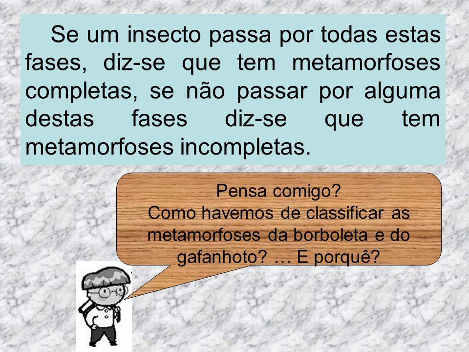 Se um insecto passa por todas estas fases, diz-se que tem metamorfoses completas, se não passar por alguma destas fases diz-se que tem metamorfoses in