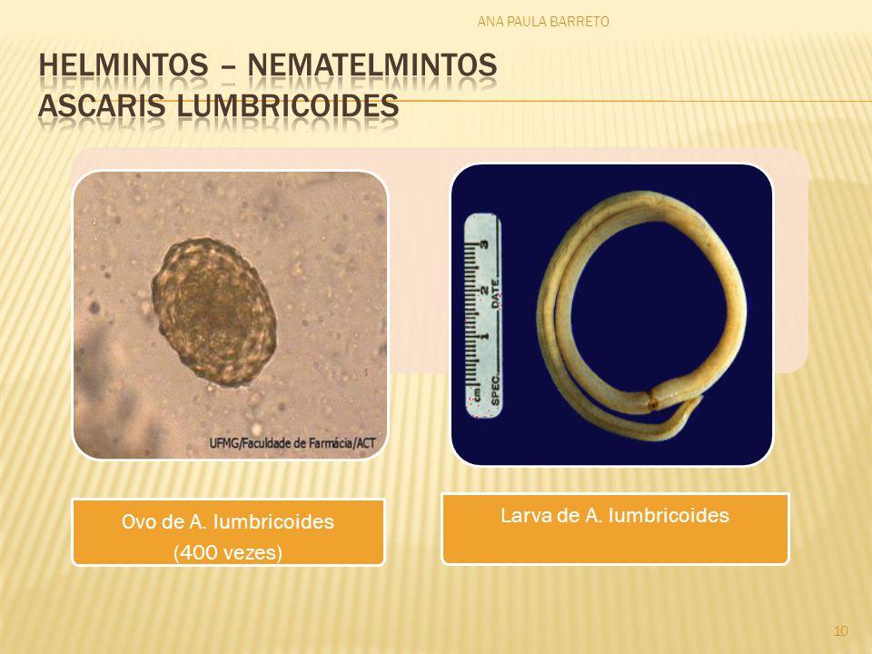 Ovo de A. lumbricoides (400 vezes) Larva de A. lumbricoides ANA PAULA BARRETO 10