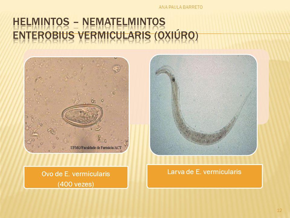 Ovo de E. vermicularis (400 vezes) Larva de E. vermicularis ANA PAULA BARRETO 12
