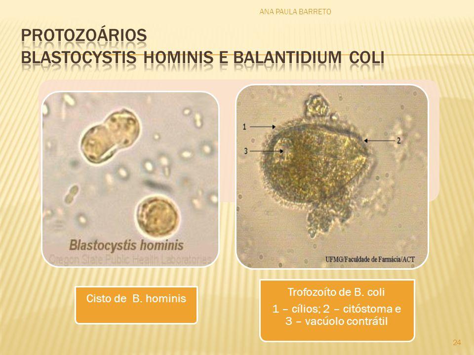 Cisto de B. hominis Trofozoíto de B. coli 1 – cílios; 2 – citóstoma e 3 – vacúolo contrátil ANA PAULA BARRETO 24