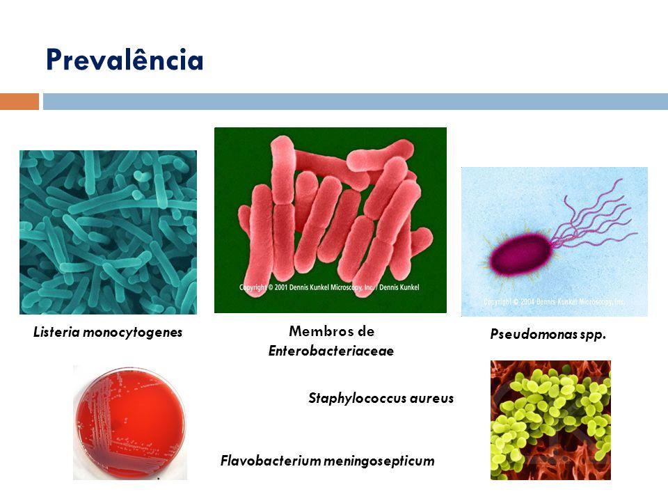 Prevalência Listeria monocytogenes Membros de Enterobacteriaceae Pseudomonas spp. Flavobacterium meningosepticum Staphylococcus aureus