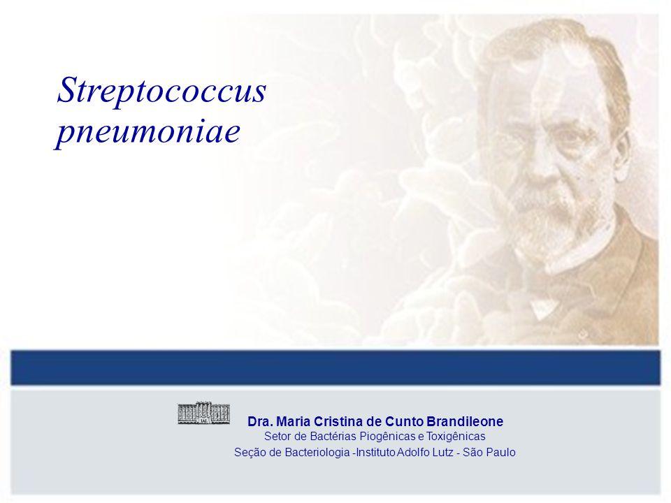 Streptococcus pneumoniae Dra. Maria Cristina de Cunto Brandileone Setor de Bactérias Piogênicas e Toxigênicas Seção de Bacteriologia -Instituto Adolfo