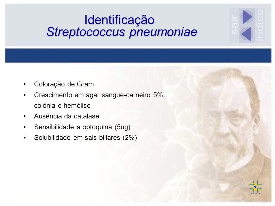 Coloração de Gram Crescimento em agar sangue-carneiro 5%: colônia e hemólise Ausência da catalase Sensibilidade a optoquina (5ug) Solubilidade em sais biliares (2%) Identificação Streptococcus pneumoniae