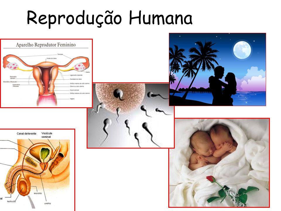 CICLO MENSTRUAL - Período correspondente entre o primeiro dia da menstruação até o dia anterior ao inicio da próxima menstruação * MENSTRUAÇÃO- Descamação do endométrio - FLUXO MENSTRUAL * Menarca * Menopausa * OVULAÇÃO- Rompimento do folículo e liberação do óvulo