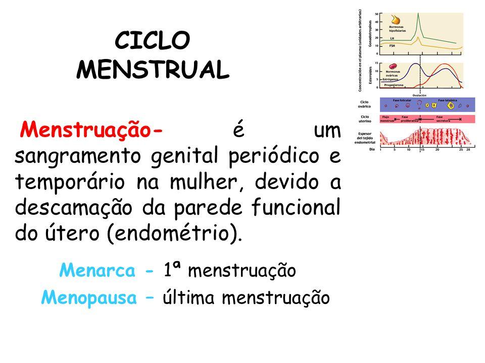 CICLO MENSTRUAL Menstruação- é um sangramento genital periódico e temporário na mulher, devido a descamação da parede funcional do útero (endométrio).