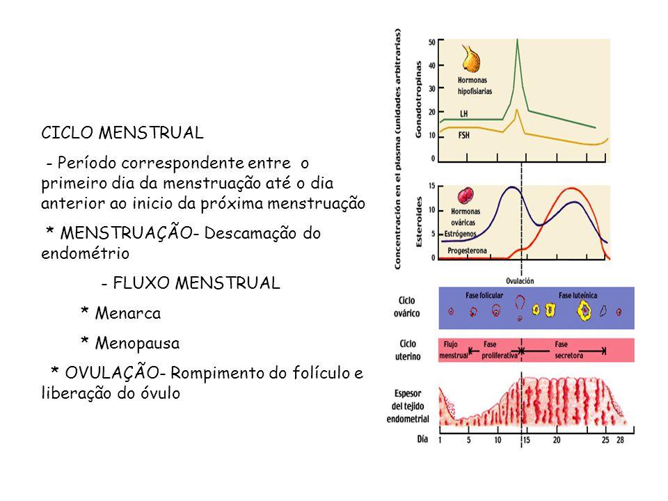 CICLO MENSTRUAL - Período correspondente entre o primeiro dia da menstruação até o dia anterior ao inicio da próxima menstruação * MENSTRUAÇÃO- Descam