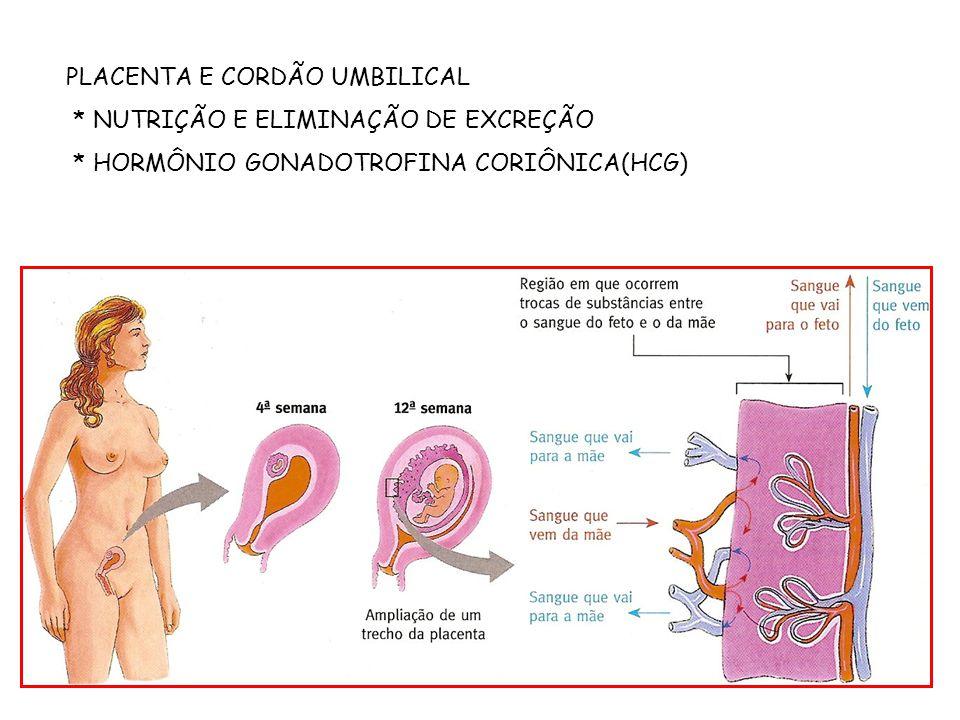 PLACENTA E CORDÃO UMBILICAL * NUTRIÇÃO E ELIMINAÇÃO DE EXCREÇÃO * HORMÔNIO GONADOTROFINA CORIÔNICA(HCG)
