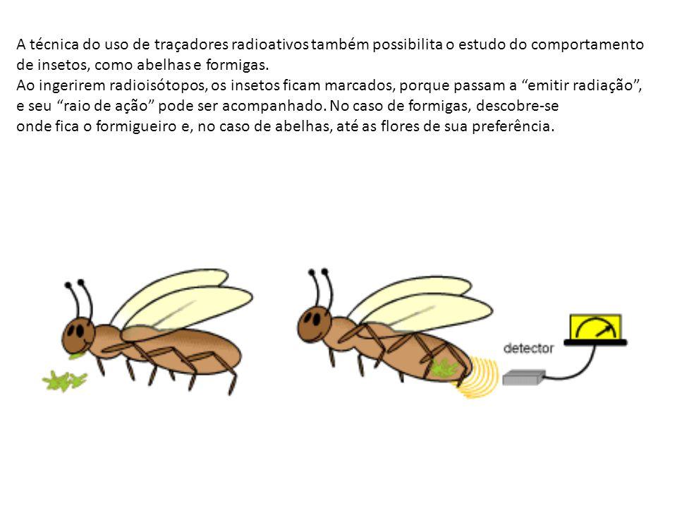 A técnica do uso de traçadores radioativos também possibilita o estudo do comportamento de insetos, como abelhas e formigas. Ao ingerirem radioisótopo