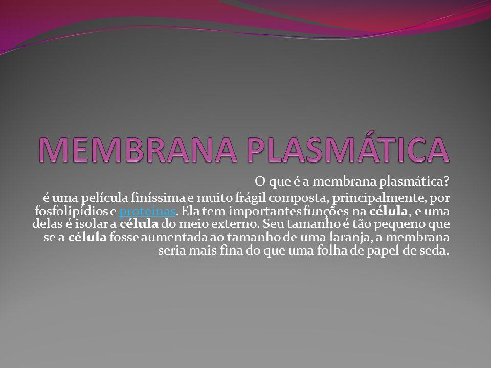 O que é a membrana plasmática? é uma película finíssima e muito frágil composta, principalmente, por fosfolipídios e proteínas. Ela tem importantes fu