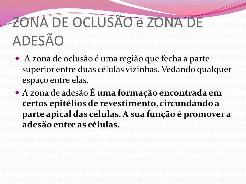 ZONA DE OCLUSÃO e ZONA DE ADESÃO A zona de oclusão é uma região que fecha a parte superior entre duas células vizinhas. Vedando qualquer espaço entre