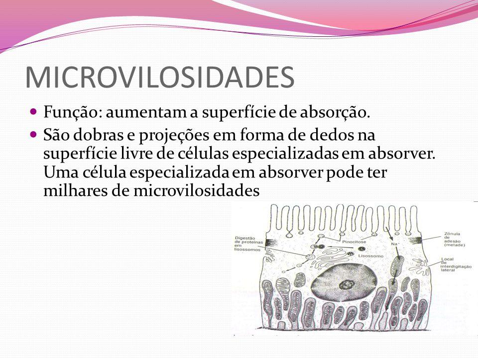 MICROVILOSIDADES Função: aumentam a superfície de absorção. São dobras e projeções em forma de dedos na superfície livre de células especializadas em