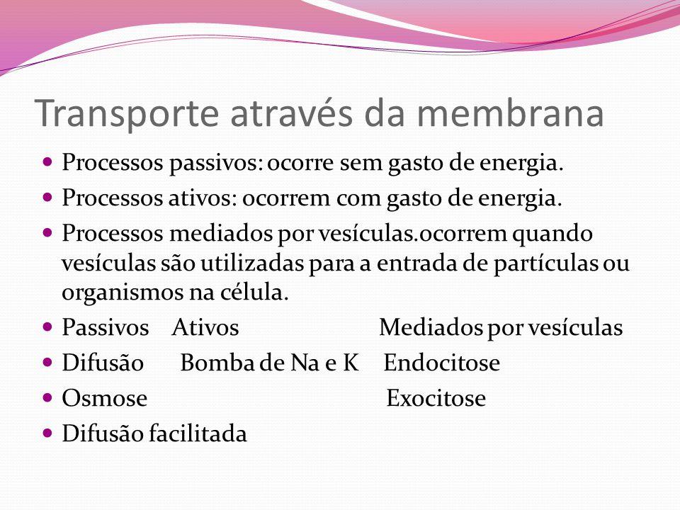 Transporte através da membrana Processos passivos: ocorre sem gasto de energia. Processos ativos: ocorrem com gasto de energia. Processos mediados por