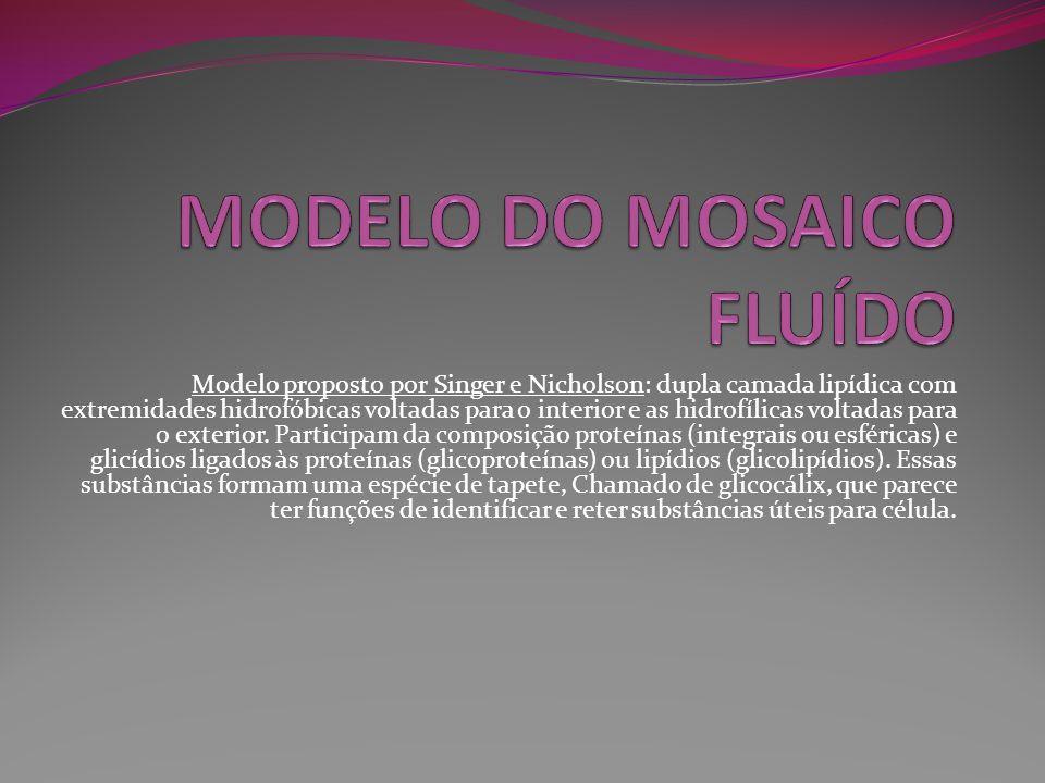 Modelo proposto por Singer e Nicholson: dupla camada lipídica com extremidades hidrofóbicas voltadas para o interior e as hidrofílicas voltadas para o