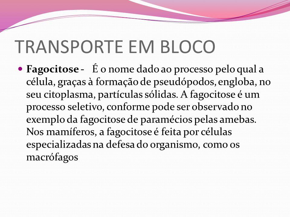 TRANSPORTE EM BLOCO Fagocitose - É o nome dado ao processo pelo qual a célula, graças à formação de pseudópodos, engloba, no seu citoplasma, partícula