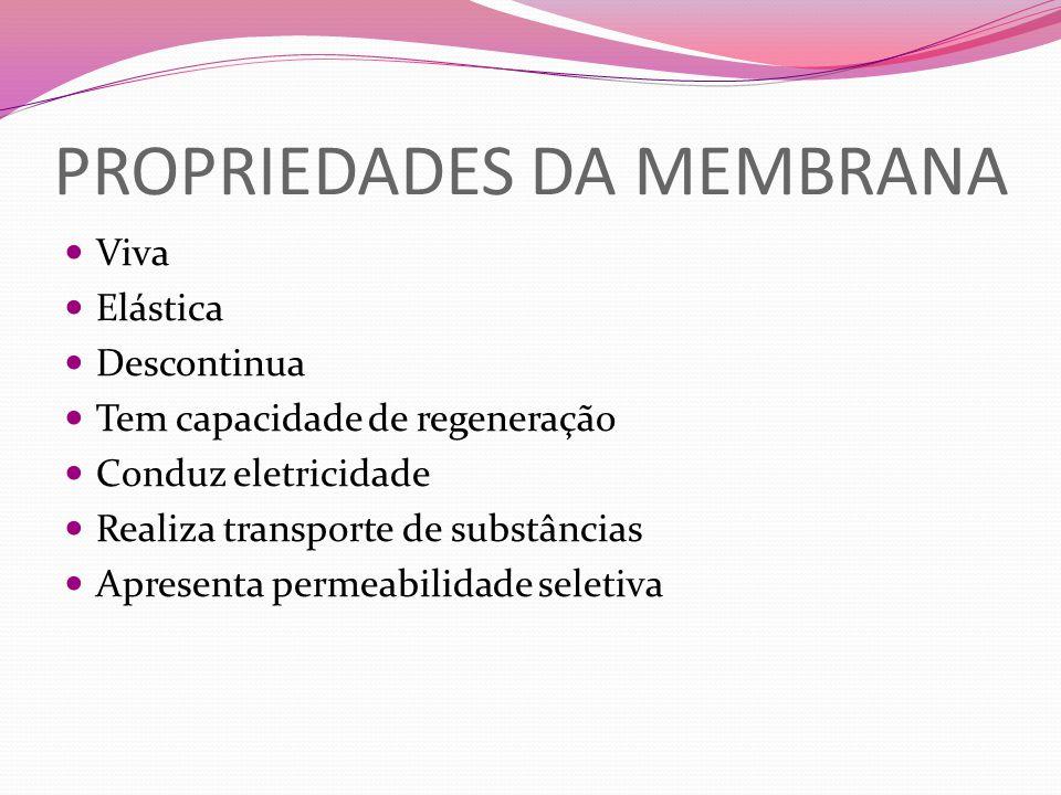 PROPRIEDADES DA MEMBRANA Viva Elástica Descontinua Tem capacidade de regeneração Conduz eletricidade Realiza transporte de substâncias Apresenta perme
