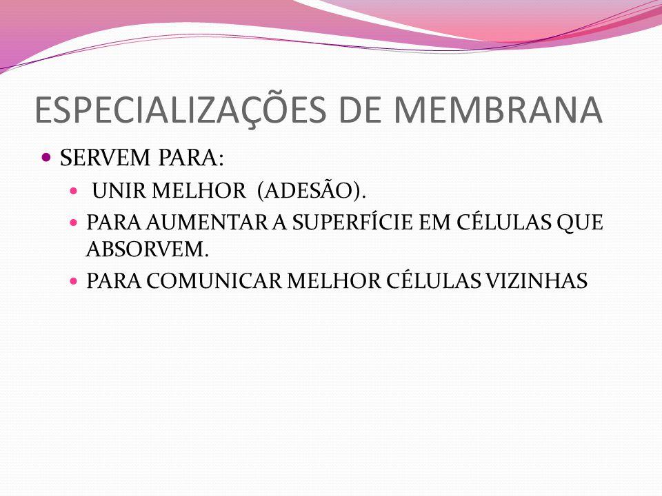 ESPECIALIZAÇÕES DE MEMBRANA SERVEM PARA: UNIR MELHOR (ADESÃO). PARA AUMENTAR A SUPERFÍCIE EM CÉLULAS QUE ABSORVEM. PARA COMUNICAR MELHOR CÉLULAS VIZIN