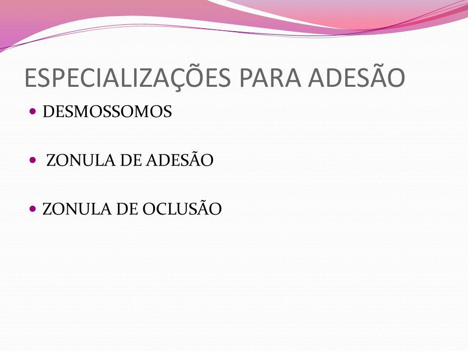 ESPECIALIZAÇÕES PARA ADESÃO DESMOSSOMOS ZONULA DE ADESÃO ZONULA DE OCLUSÃO
