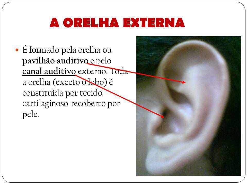 A orelha, órgão responsável pela audição, está dividido em três partes: Orelha externa Orelha média Orelha interna.
