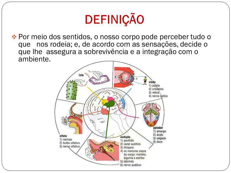 Órgãos do Sentidos SISTEMA SENSORIAL