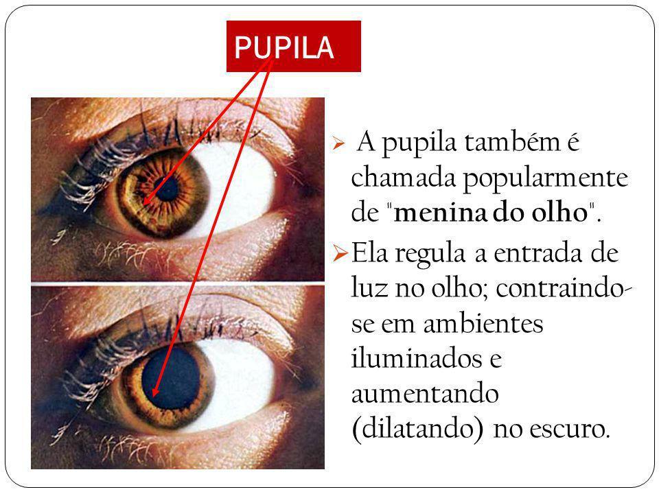 ÍRIS É a parte colorida do olho, fica atrás da córnea (é vista porque a córnea é transparente). A íris possui em seu centro um orifício chamado pupila
