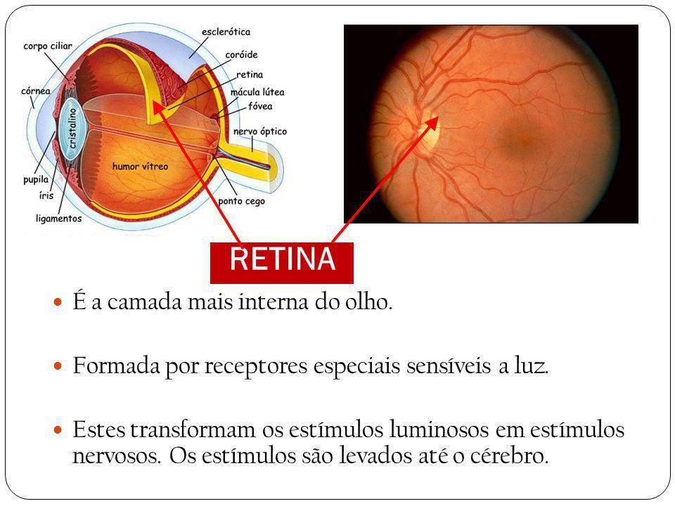 VÍTREO Também chamado humor vítreo. É uma substância gelatinosa que preenche toda a cavidade posterior do olho, atrás do cristalino. O vítreo mantém a