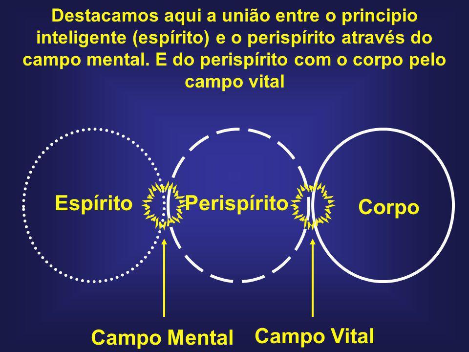 EspíritoPerispírito Corpo Campo Mental Campo Vital Destacamos aqui a união entre o principio inteligente (espírito) e o perispírito através do campo m