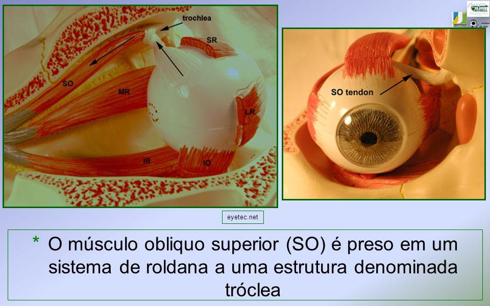 * O músculo obliquo superior (SO) é preso em um sistema de roldana a uma estrutura denominada tróclea eyetec.net