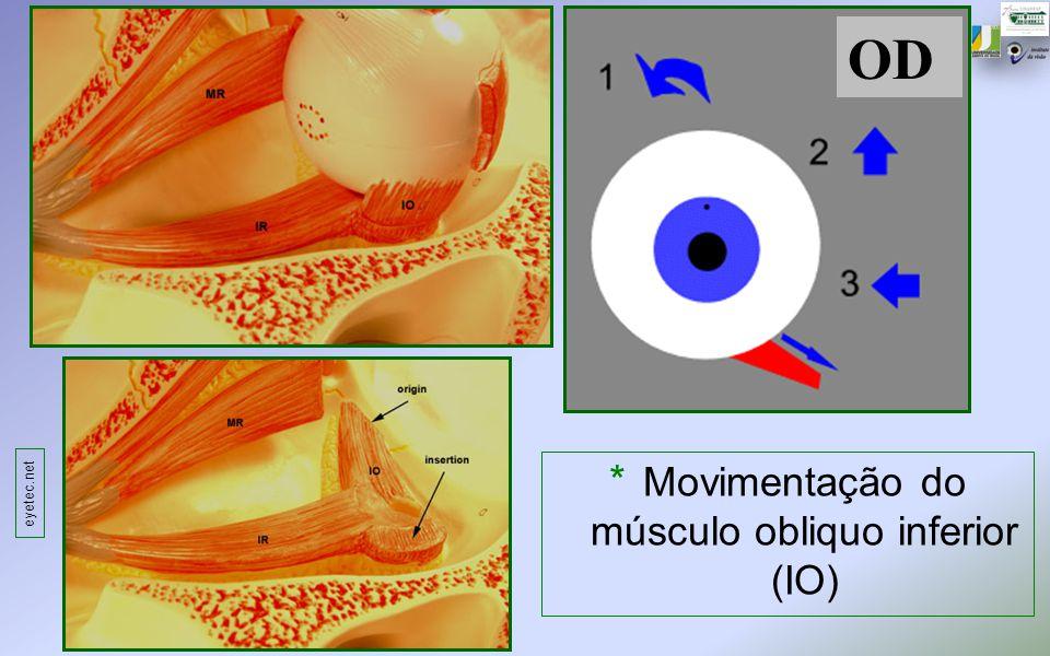 OD * Movimentação do músculo obliquo inferior (IO) eyetec.net