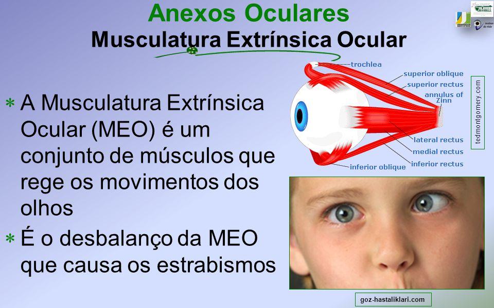 Anexos Oculares Musculatura Extrínsica Ocular A Musculatura Extrínsica Ocular (MEO) é um conjunto de músculos que rege os movimentos dos olhos É o des