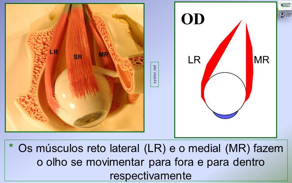 OD * Os músculos reto lateral (LR) e o medial (MR) fazem o olho se movimentar para fora e para dentro respectivamente eyetec.net
