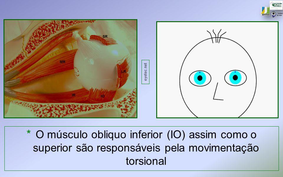 * O músculo obliquo inferior (IO) assim como o superior são responsáveis pela movimentação torsional eyetec.net