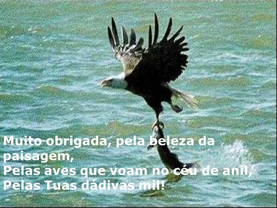 Muito obrigada, pela beleza da paisagem, Pelas aves que voam no céu de anil, Pelas Tuas dádivas mil!
