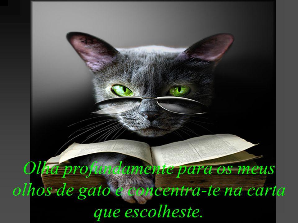Olha profundamente para os meus olhos de gato e concentra-te na carta que escolheste.
