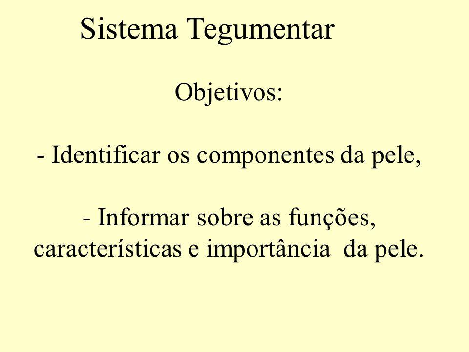 Sistema Tegumentar.Introdução Componentes: Pele (cutis) e anexos cutâneos.